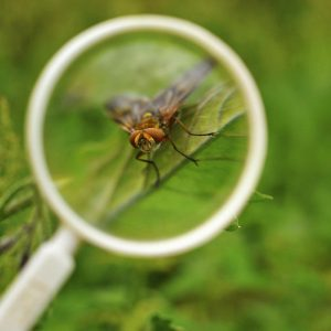Nimm ein Vergrößerungsglas auf Deine Tour mit. Insekten können fast so wie gigantische Monster aussehen, wenn Du sie durch die Lupe betrachtest.